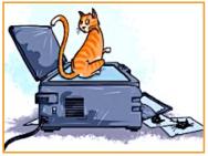cat on copier