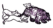 dogs & bear play