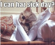 sick-day cat
