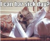 sick-day cat