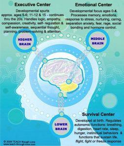 3 brain centers