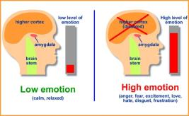 BrainCoherenceEmotion