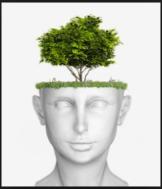 neuro[plasticity