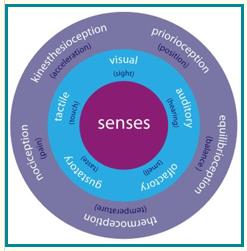 senses circle
