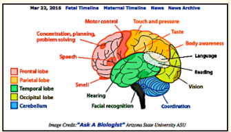 Learning styles heal grow for acoas research shows that each learning brain senses ccuart Images