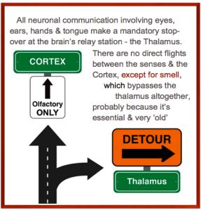 sense & thalamus